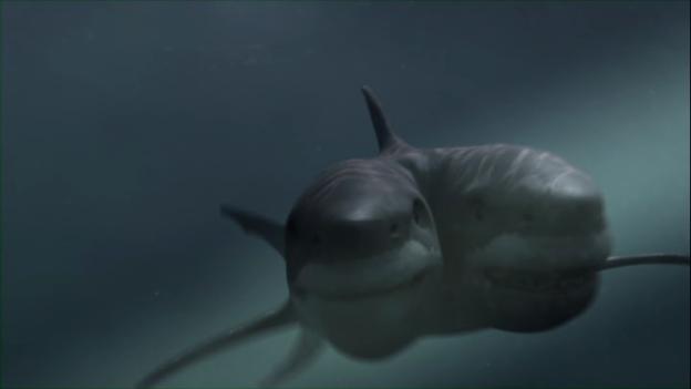 Un raro esemplare di squalo maxibon.