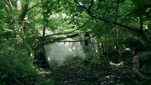 Possessione demoniaca into the woods